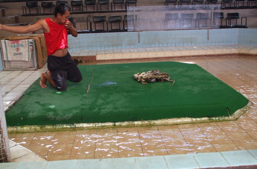 תאילנד תמונות וסרטים על נחשים