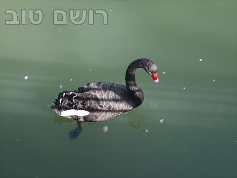 אגם רעננה-14