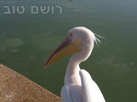 אגם רעננה-16