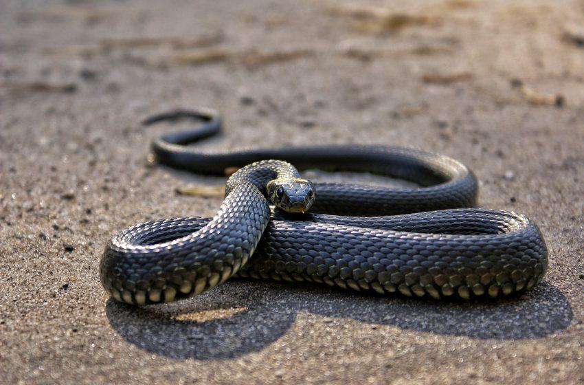 הנחש וסיפורו