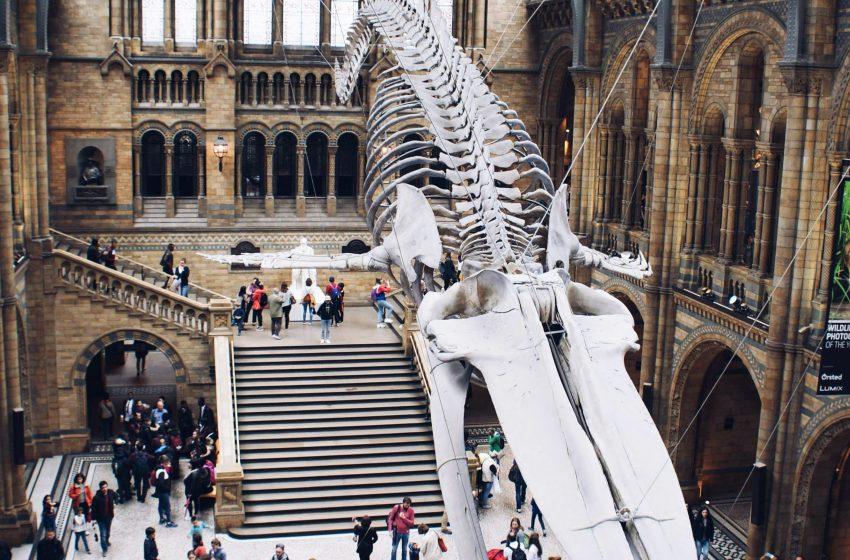בריטניה לונדון מוזיאון הטבע