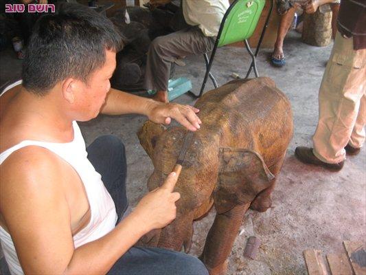 תאילנד אומנות