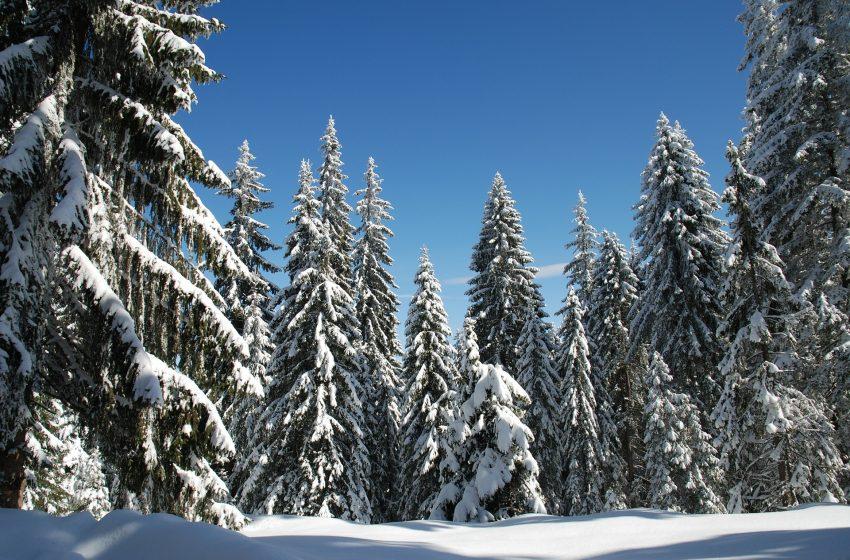 בולגריה נוסעים ליער פמפורובו